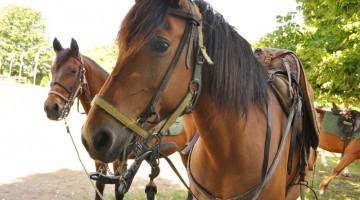 Idee per l'estate: un tour a cavallo per scoprire l?Italia in sella all?animale più nobile ed elegante (foto: Valentina Castellano Chiodo)