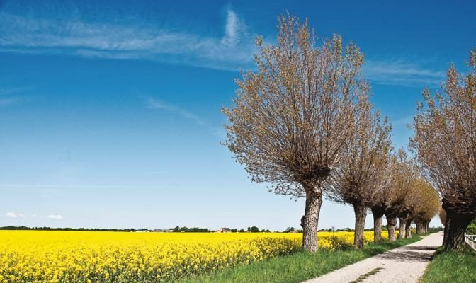 Foto Primavera al Nord