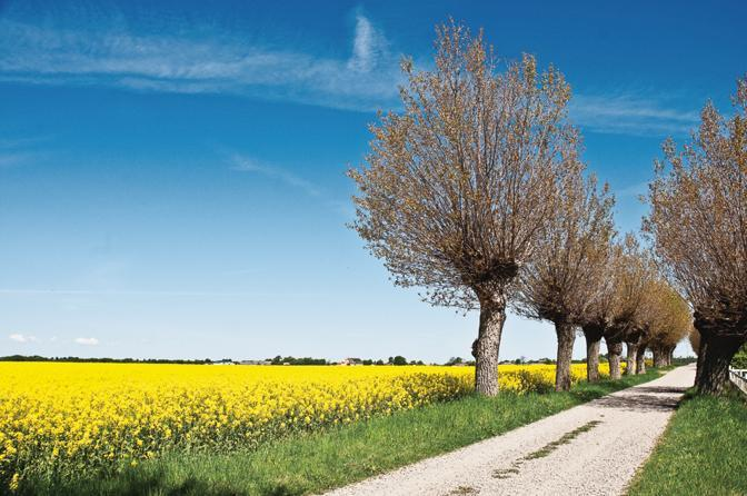 Primavera al Nord