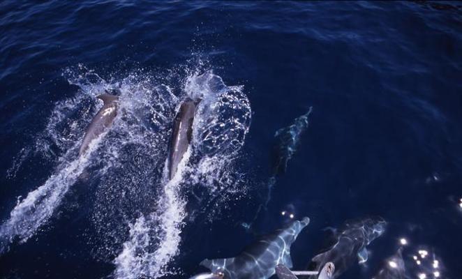 Foto Tuffi tra i delfini