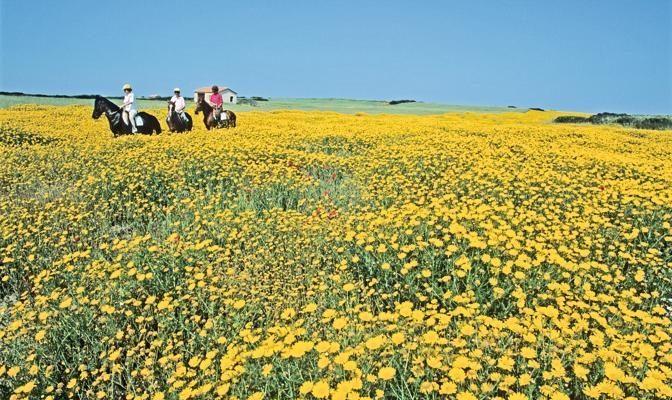 Foto Sardegna, l'isola in fiore