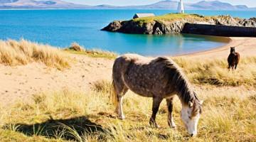 Riserve naturali e coste protette: benvenuti ad Anglesey, top destination 2011. Sull'isola del Galles William e Kate verranno a vivere dopo l'atteso matrimonio