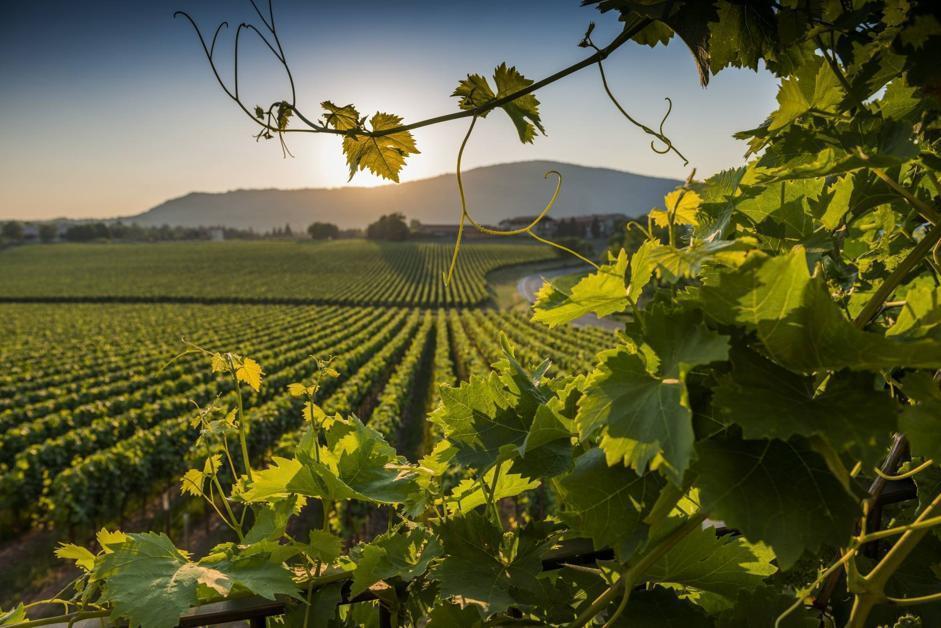 Risultati immagini per Franciacorta vineyard estate