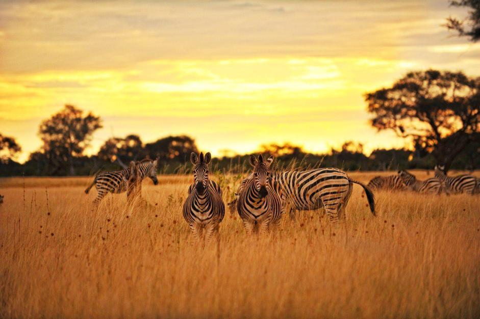 Spettacolo safari