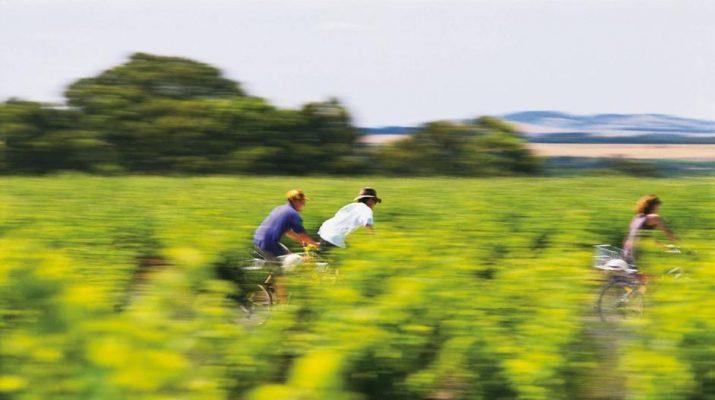 Foto Langhe, a piedi o in bici nelle vigne: LE FOTO