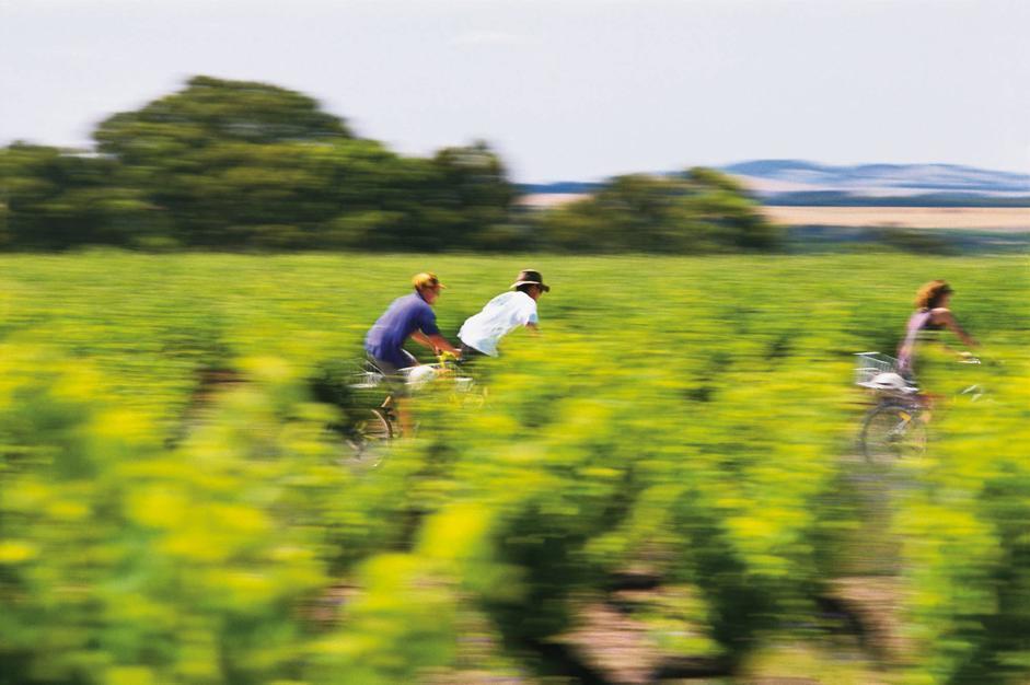 Langhe, a piedi o in bici nelle vigne: LE FOTO