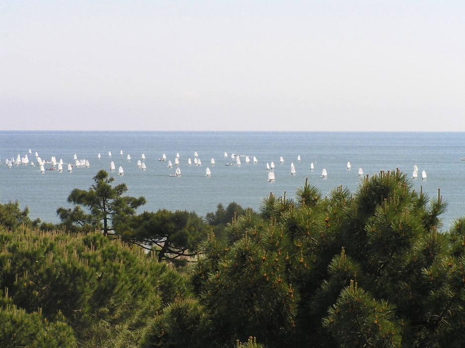 Adriatico Wild