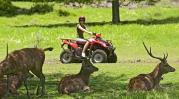 I cervi vivono indisturbati nella Val Riche Forest, oasi incantata nella costa sud dell'isola Mauritius