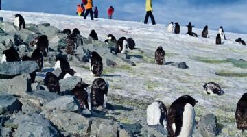 Mete Antiafa: in Antardide partono le fresche spedizioni a caccia dei simpatici abitanti del Polo Sud (foto: Alamy/Milestonemedia)
