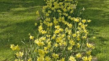 Stoccolma si prepara a un?invasione di primavera con Nordic Gardens 2013, un festival per discutere, imparare e studiare il giardinaggio e le piccole coltivazioni (foto: Moona Loose/imagebank.sweden.se)