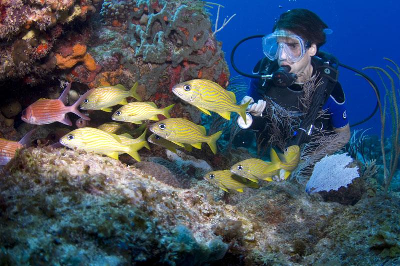 Il reef di St Croix è l'unico momumento nazionale americano sottomarino (foto: USVI DOT)