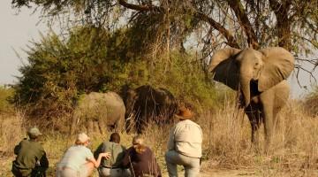 Lo Zambia è il regno degli elefanti e d è facili avvistarli a una breve distanza