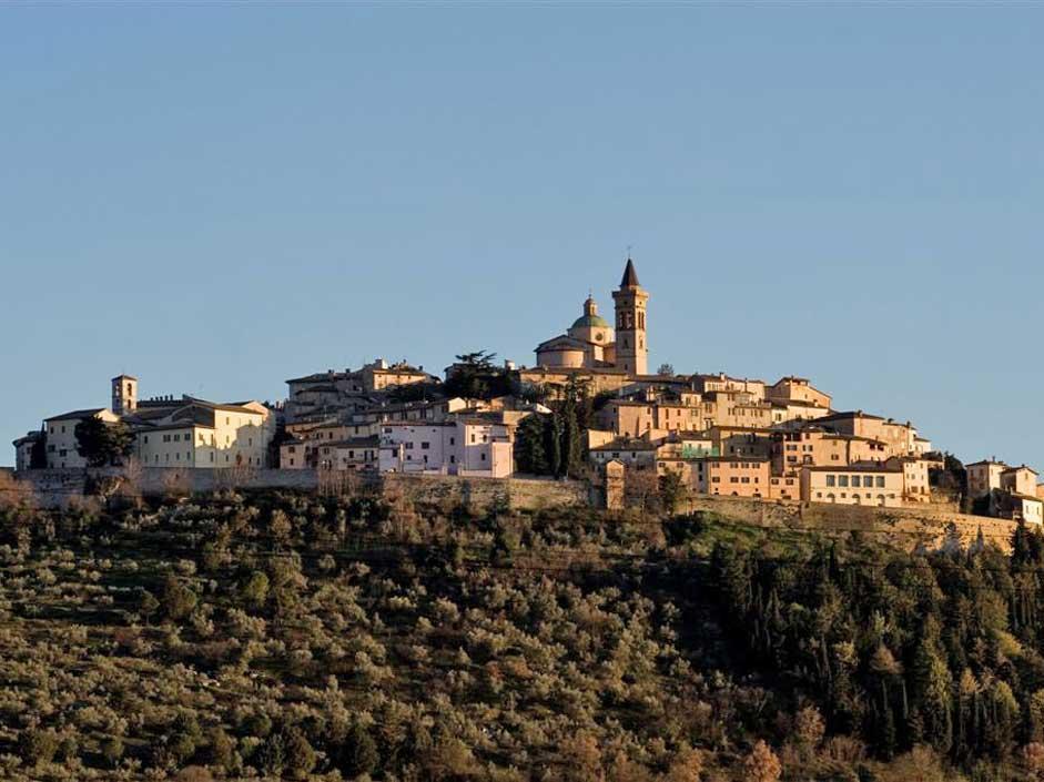 L'oro verde dell'Umbria: LE FOTO