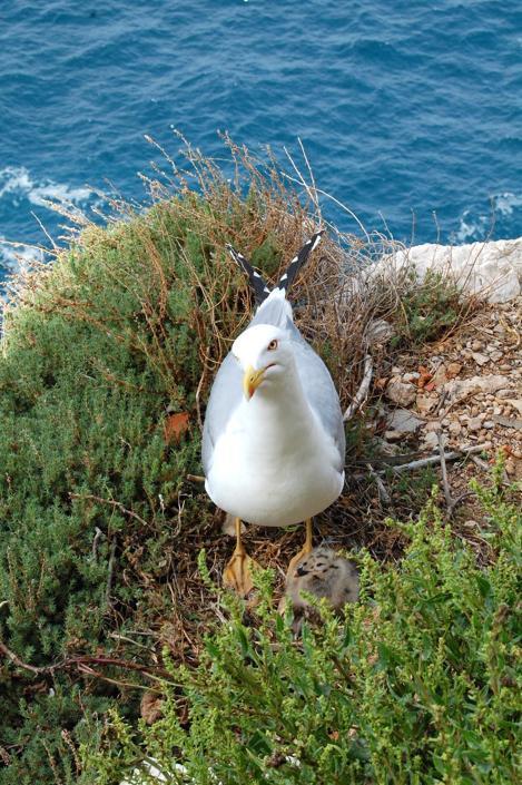 Sardegna selvaggia