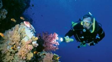 Gli amanti del mare scelgano i per nuotare fra pesci e colori unici della barriera corallina