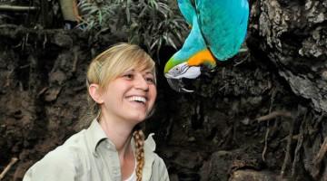 Uccelli tropicali allo Zoo del Central Park di New York