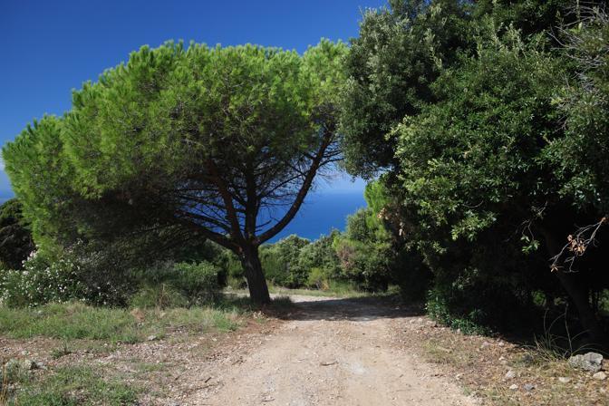 Toscana wild