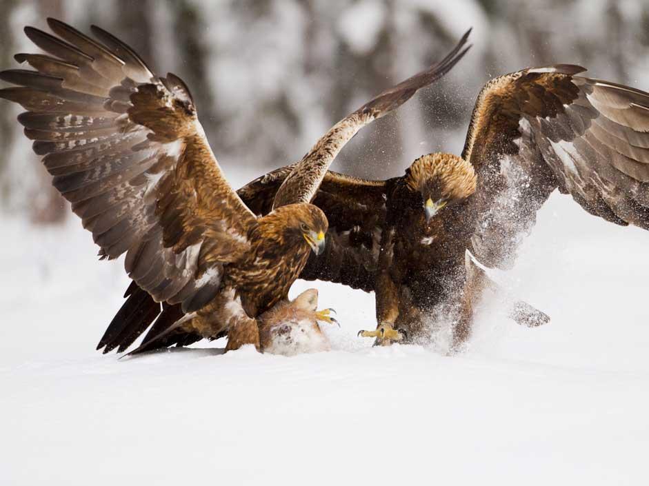 Foto La grande natura: GUARDA LE FOTO