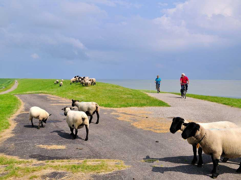 Frisia, l'oro del Nord: LA FOTOGALLERY