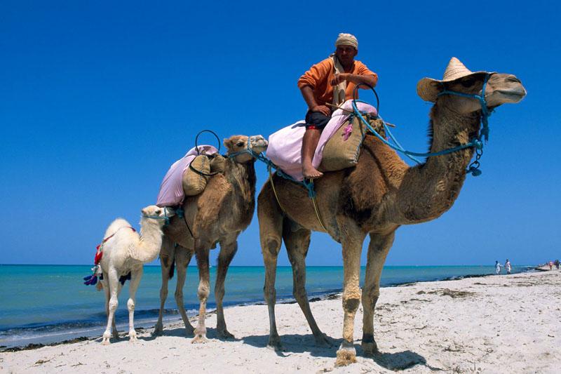 Tunisia, Djerba: è un luogo di fascino, con lunghe spiagge di sabbia bianca orlate di dune e palme (foto: Alamy/Milestonemedia)