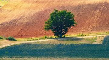 Un paesaggio da cartolina nei dintorni di Manosque, nel centro della Provenza della lavanda (foto Alamy/Milestonemedia)