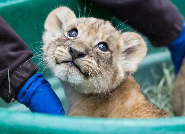 Cuccioli allo zoo, i più belli del mondo