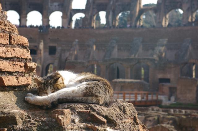 Gatti all'ultimo sole: i più bei ritratti di settembre