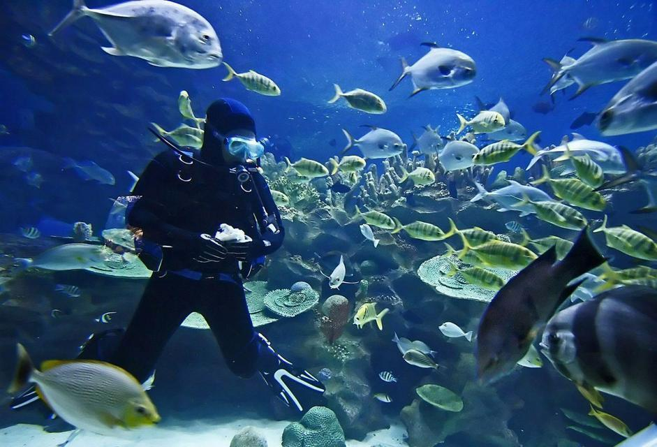 Un sub si immerge nelle acque di fronte a Marsa Alam