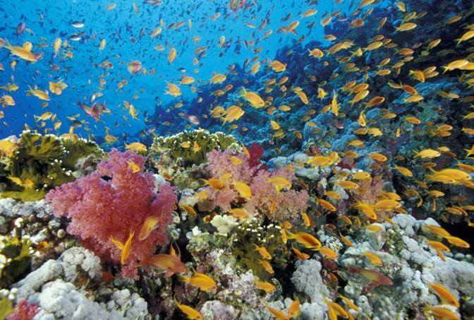 Paradisi sott'acqua