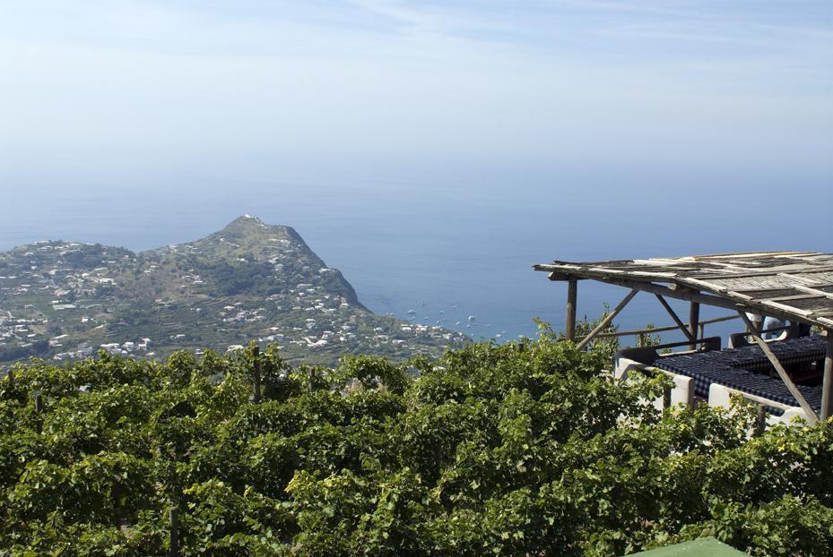 Foto Ischia, massaggi e vendemmie