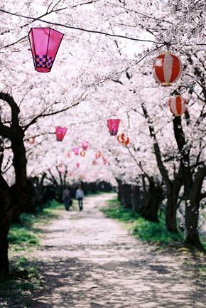Ciliegi in fiore: 15 mete spettacolo per vederli (non solo in Giappone)