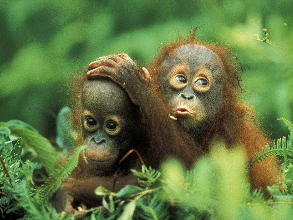 Foto Gli scimmiottini più simpatici