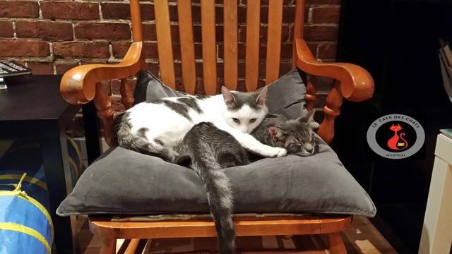Cat café: i bar per gli amanti dei gatti arrivano in Canada