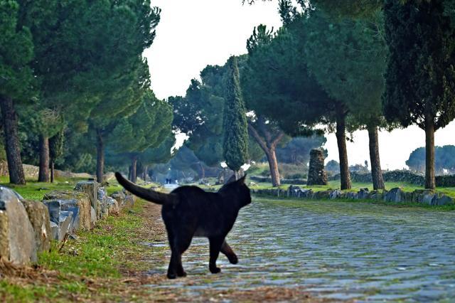 Facile imbattersi nei gatti a Roma, non solo in centro. Lungo l'Appia Antica i felini passeggiano indisturbati nelle varie ore del giorno (foto: Flickr/Gianluca Carnicella)