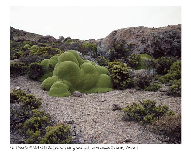 Gli esseri viventi più antichi del pianeta