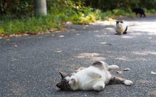 Foto Gatti all'ultimo sole: i più bei ritratti di settembre