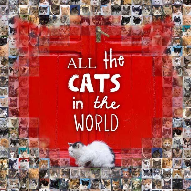 Gatti del Galles e di altri 44 Paesi del mondo