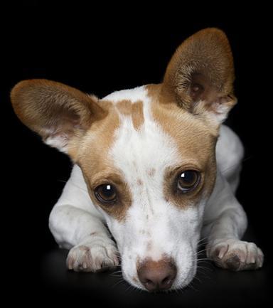 I cuccioli della fotografa giramondo:  20 scatti irresistibili