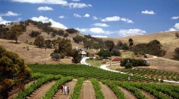 On Tour tra le vigne della Barossa Valley  (foto: Southaustralia.com)