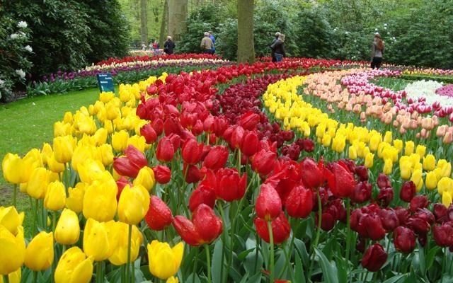 Foto Amsterdam: aprono i giardini segreti