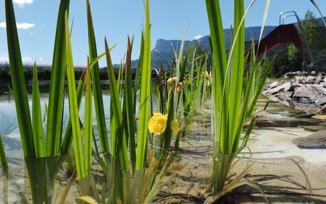 Foto Acqua dolce: 10 tuffi di lago scelti da Dove