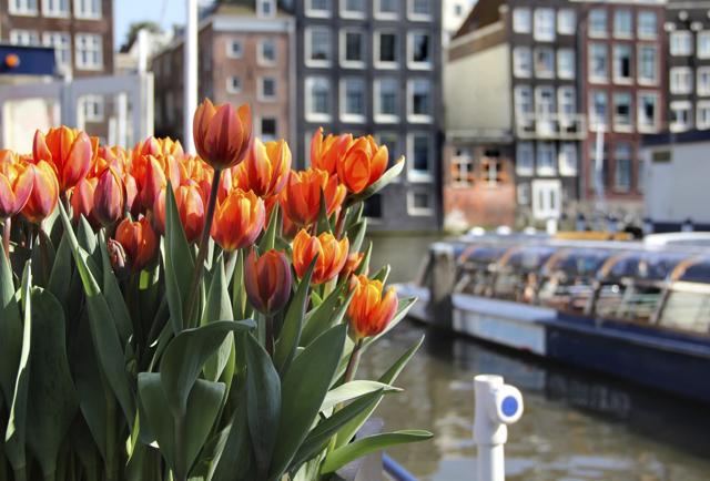 Pazzi per i tulipani? 10 luoghi imperdibili in Olanda