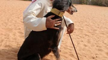 Il direttore dell'Arabian Saluki Center di Abu Dhabi, Hamad Al Ghanem (foto: Carlotta Lombardo)