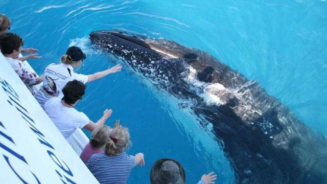 Crolla la caccia alle balene: 10 mete per il  Whale Watching