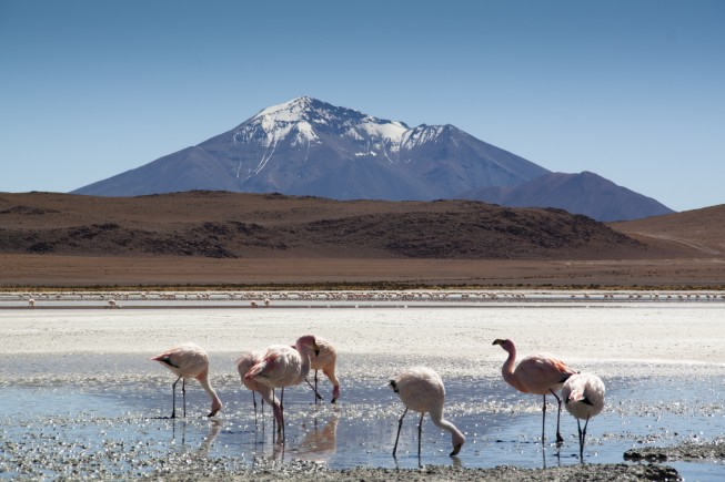 Flamingos at the highlands