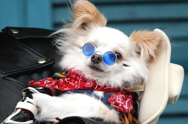 Carnevale…da cani