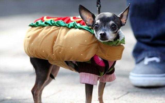 Foto Carnevale...da cani
