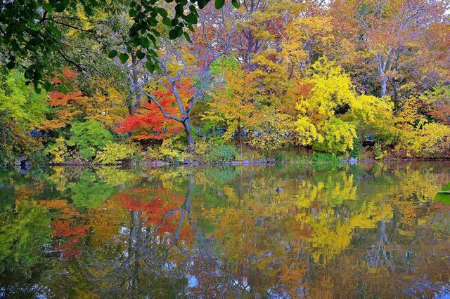 Foliage, 15 mete per innamorarsi dell'autunno