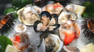 Frutti di mare crudi: un piatto tipico nei ristoranti della costiera amalfitana (foto: Carlos Solito—DOVE)