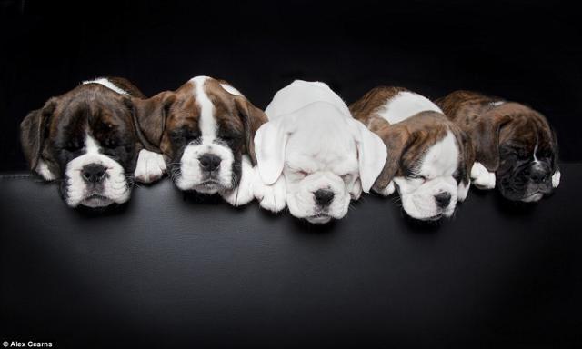 Foto I cuccioli della fotografa giramondo:  20 scatti irresistibili
